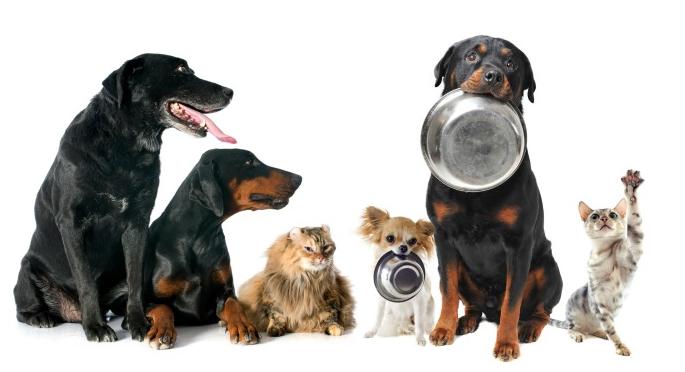 Comida para perros y gatos: Nutrición ideal para tu mascota